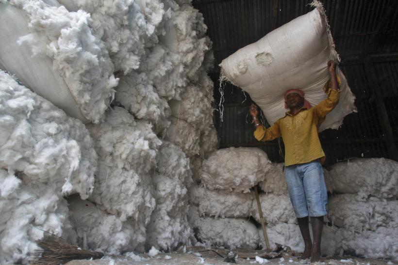 Cotton Crops Climate Change