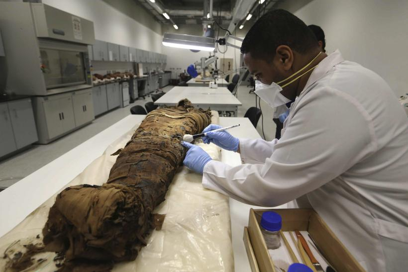 8 Million Mummified Dogs Other Animals
