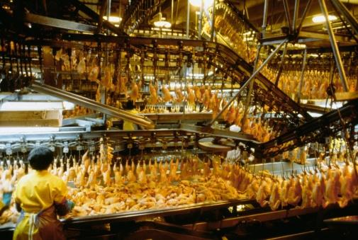 USDA Approves Controversial Poultry Inspection Overhaul