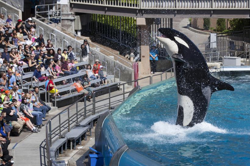 SeaWorld Trainers Can't Swim With Orcas Now