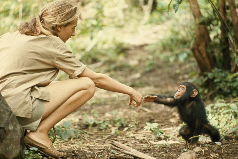 Is China Colonizing Africa? Jane Goodall Thinks So