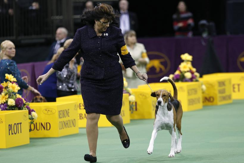 National Dog Show 2014: When And Where To Watch On TV, Live Stream For 13th Annual Thanksgiving Day Special
