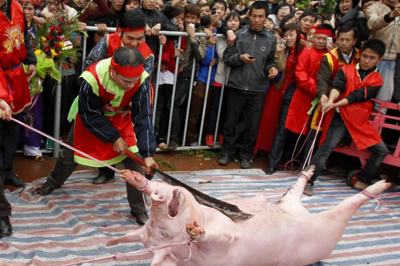 Vietnam Pig Slaughter Festival: Government Speaks Out Against Violent Celebrations