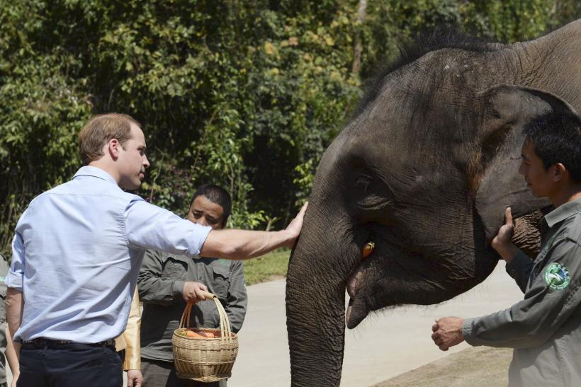 prince william elephant
